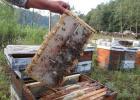 养蜂 知识 蜜蜂 敌害 养蜂技术