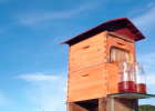 蜜蜂 蜂蜜 养蜂 养蜂视频 养蜂技术 蜂箱制作 自动流蜜蜂箱