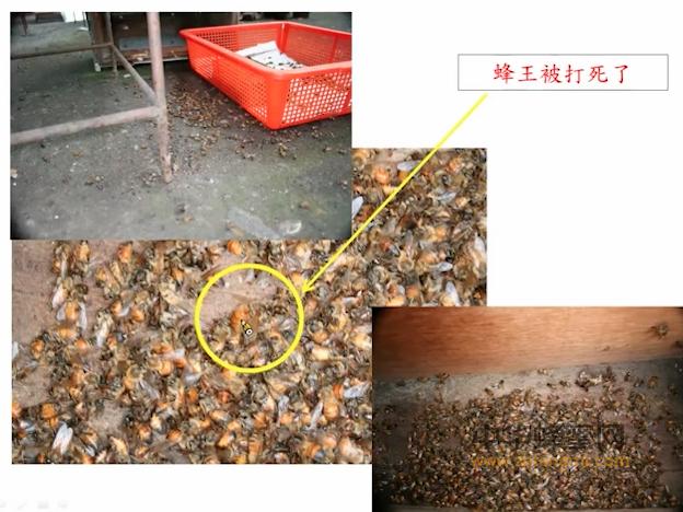 【视频】养蜂技术视频宜兰大学养蜂教授讲蜂场管理