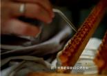 【视频】养蜂技术视频-蜂王浆采集
