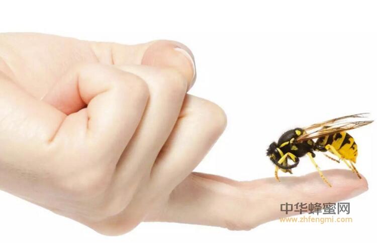 蜂毒 蜂毒疗法 过敏 处置方法 方法 蜂螫 蜂疗 养蜂人