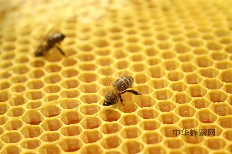 蜂胶 如何 世界 关注 天然 抗氧化