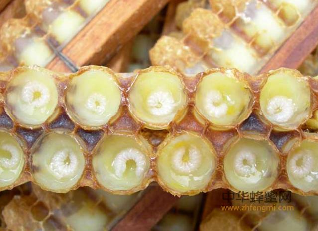 蜂王浆 抗癌防癌 蜂王浆的作用与功效