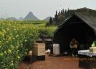 蜜蜂 养蜜蜂 家庭养蜂 蜜蜂 蜂王浆