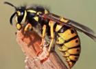 视频 大黄蜂 病虫害 养蜂技术视频