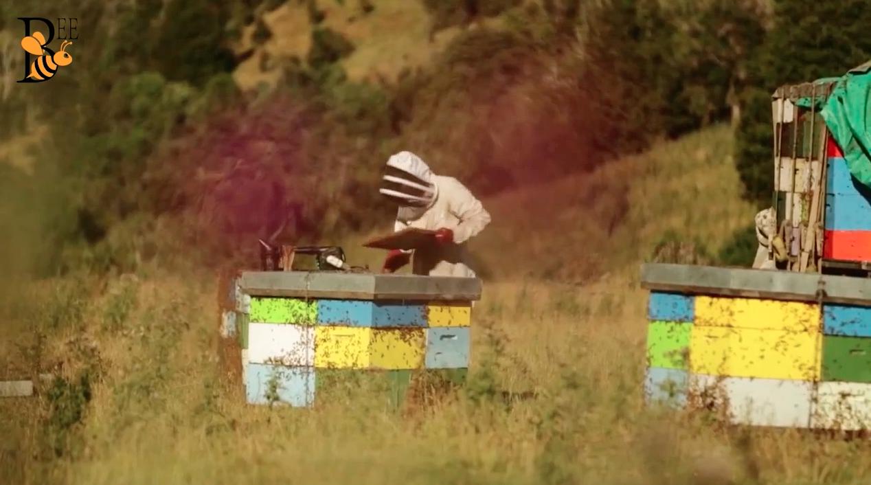 养蜂人 国外养蜂视频 视频 养蜂技术视频