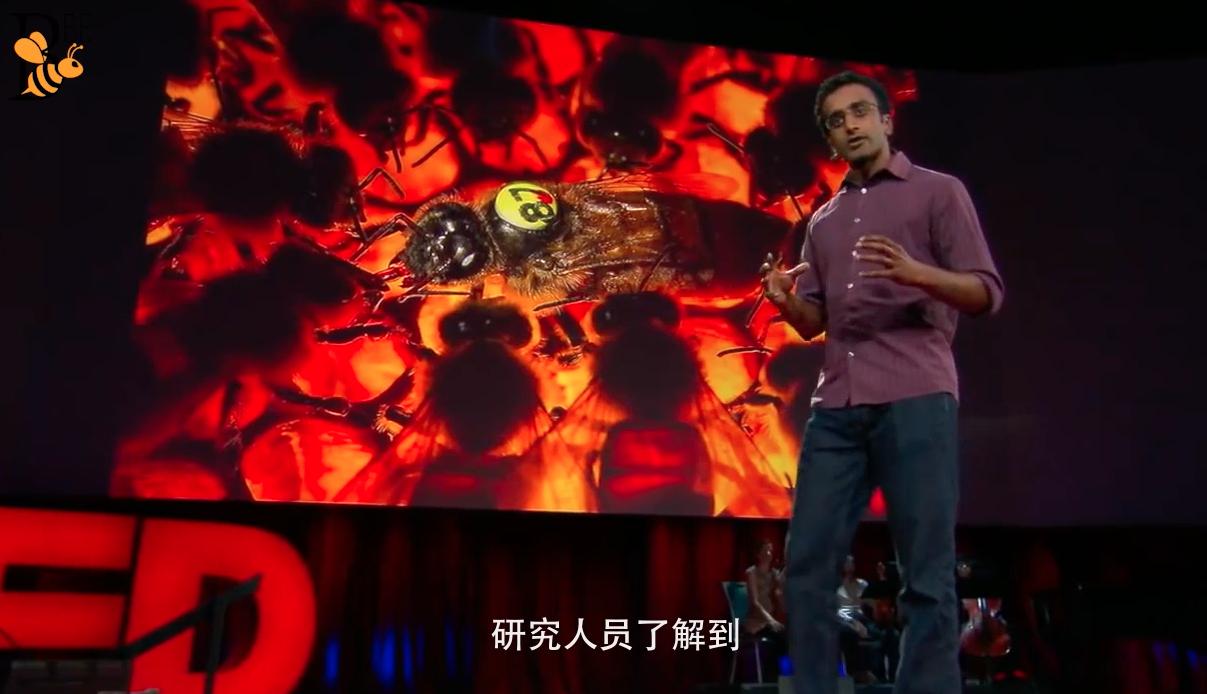 蜜蜂 视频 国外养蜂视频 养蜂技术视频