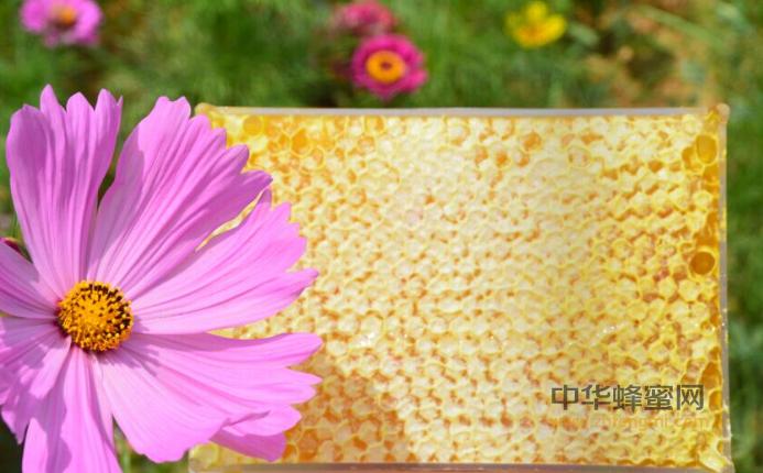 蜂蜜 巢蜜 巢蜜生产技术 巢蜜怎么生产