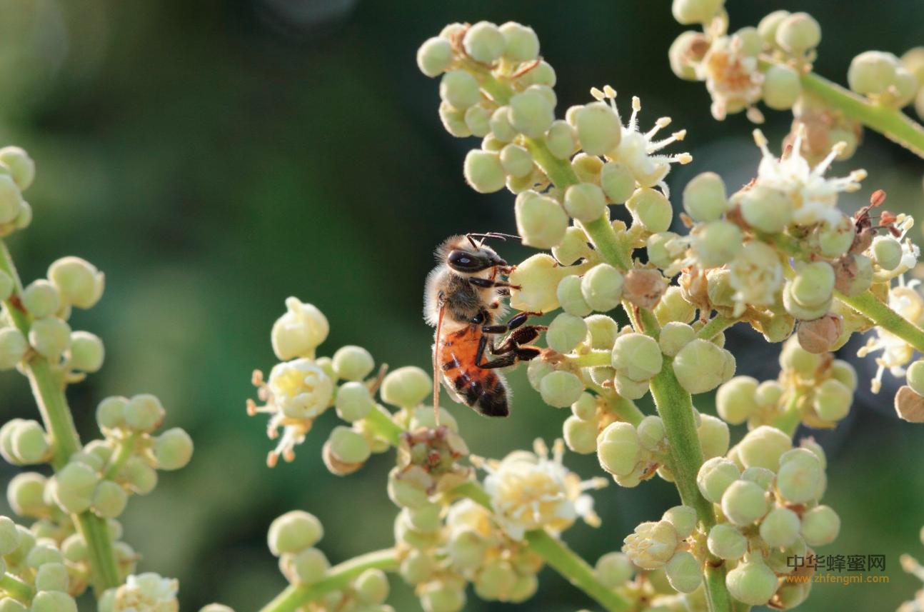 授粉 昆虫 保护 生态系统