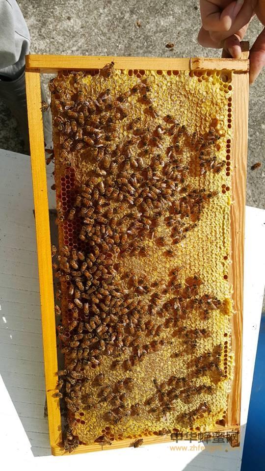 蜂具 养蜂工具 割蜂蜜 割蜜机
