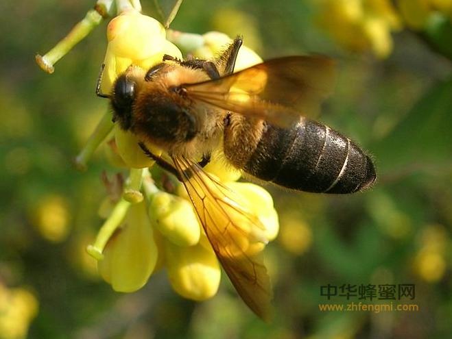 蜜蜂 蜜蜂养殖 蜜蜂越冬 蜂群管理
