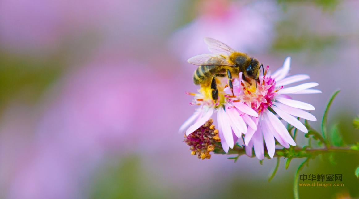 蜂蜜 越冬 越冬室 蜂群