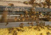 巢前式蜂花粉采集器