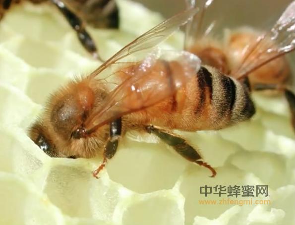 蜂具 养蜂工具 蜂蜡