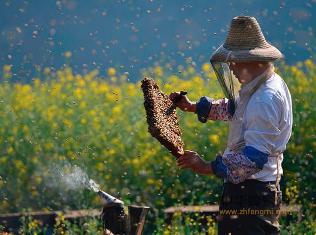 蜜蜂 病虫害 粉介病
