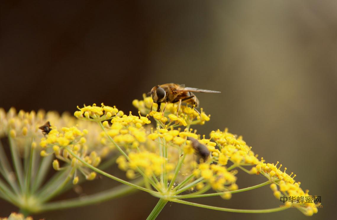 麻痹病 蜜蜂 病虫害 病毒增殖