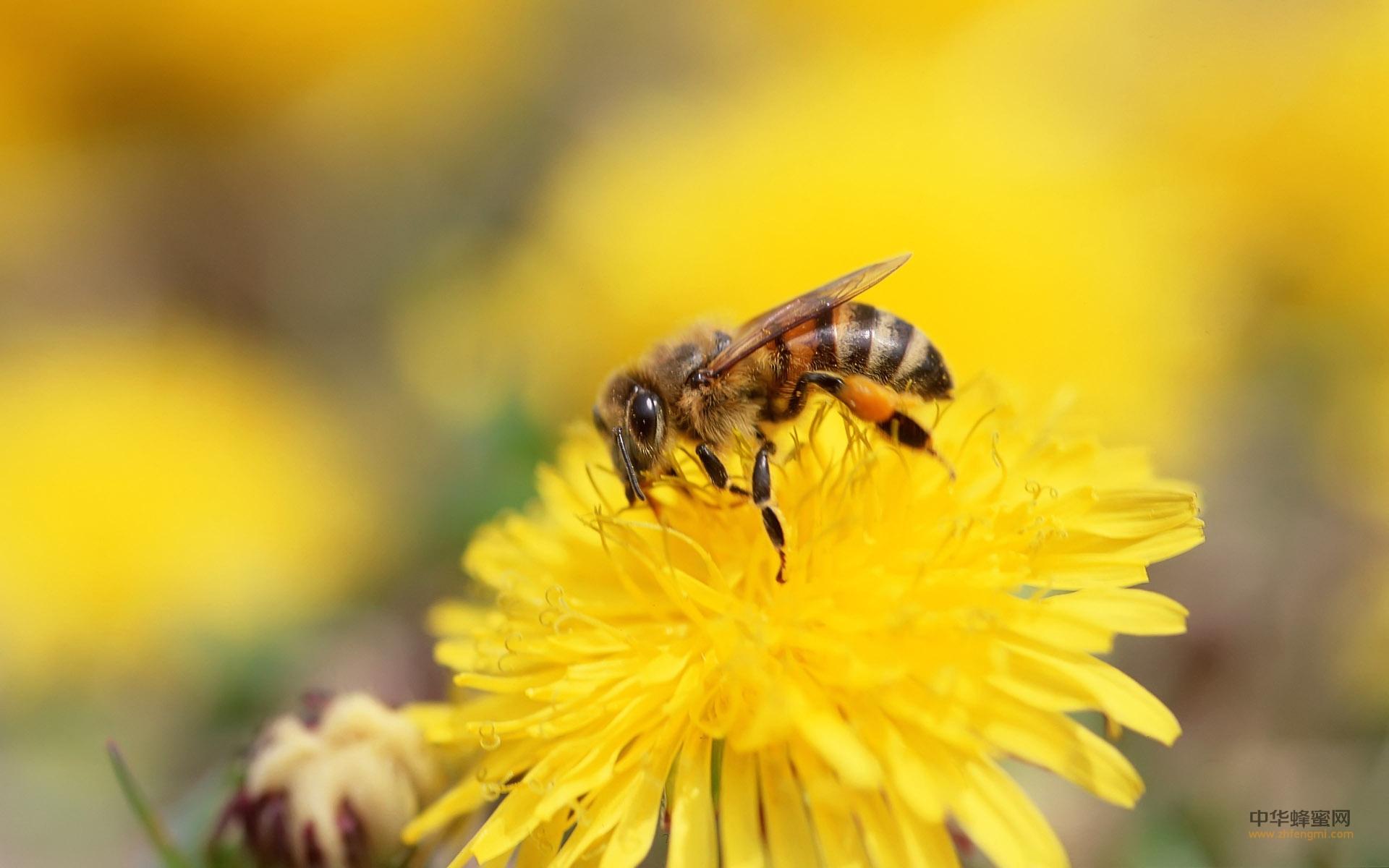 我国蜂蜜 蜂蜜 产区 种类 主要蜂蜜 蜂蜜分类