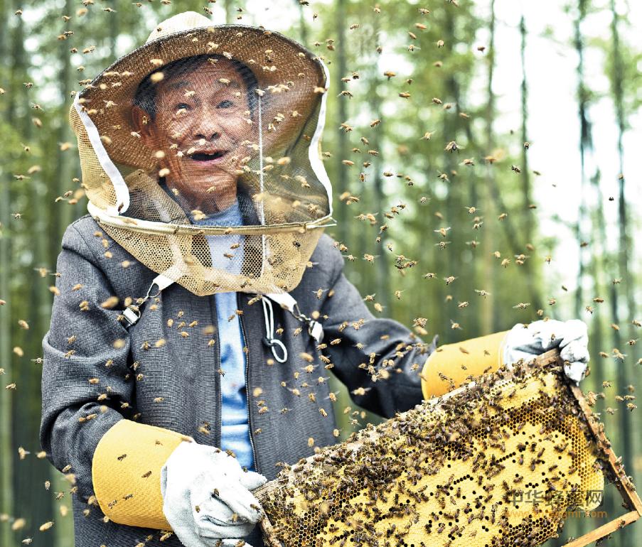 蜜蜂养殖 养蜂人 养蜂人故事 养蜂生活
