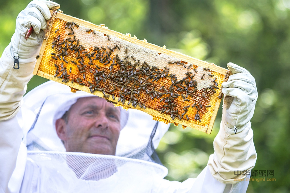 蜂胶 力量 蜂胶作用