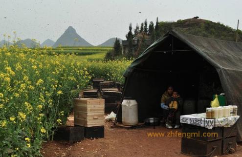 养蜂人 养蜂人故事 养蜂生活