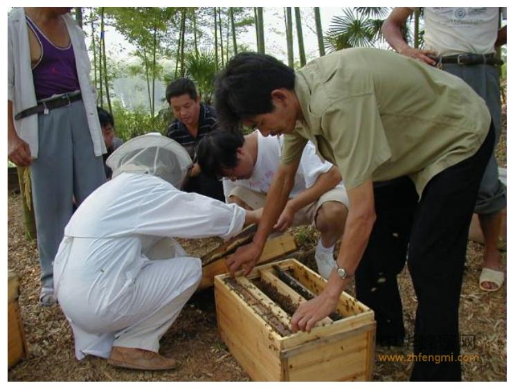 湖南澧县蜂业协会把养蜂列为精准扶贫措施