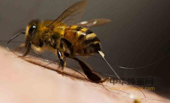 蜜蜂 异常病害 痢疾