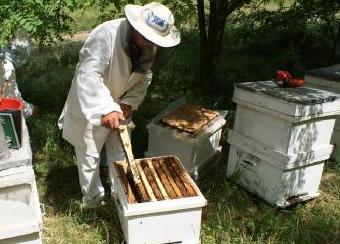敌害 蜜蜂 其他辞翅目蛾类