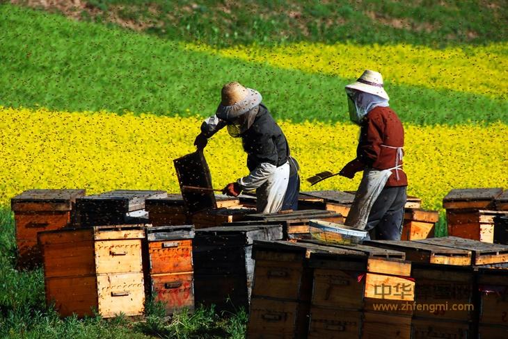 敌害 病害 蜜蜂 防治原理