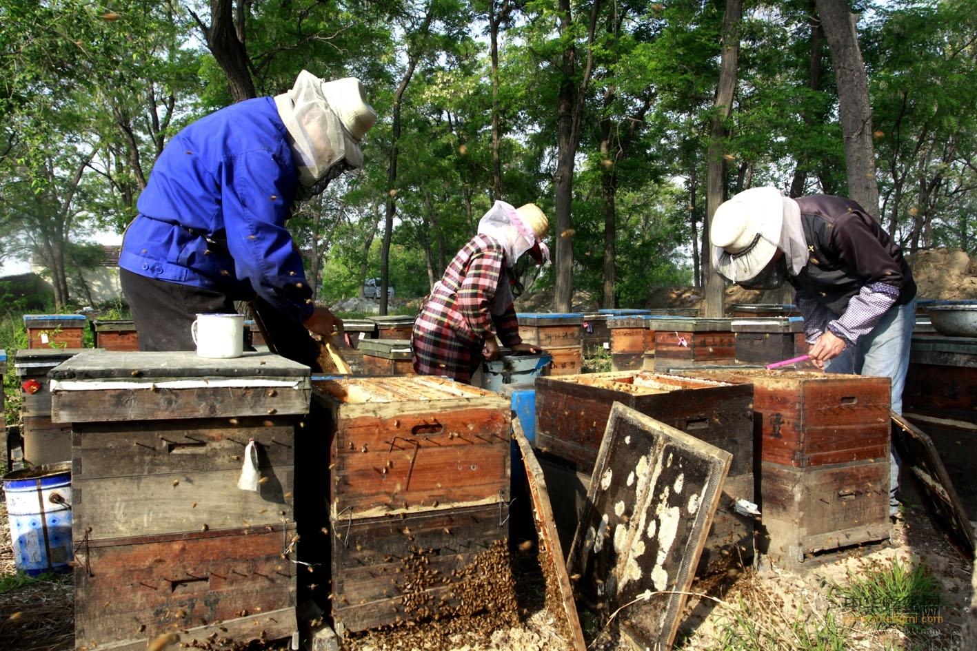 蜜蜂病害 预防方法 治疗方法