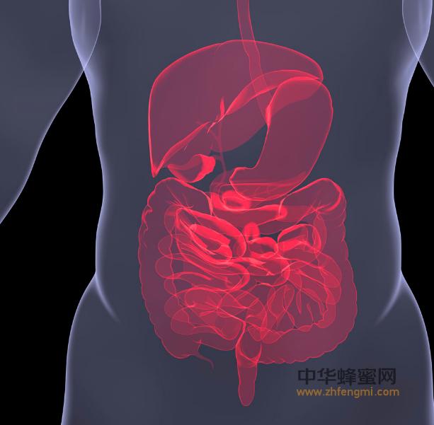 蜂皇浆 蜂皇浆的作用与功效 胃肠道疾病