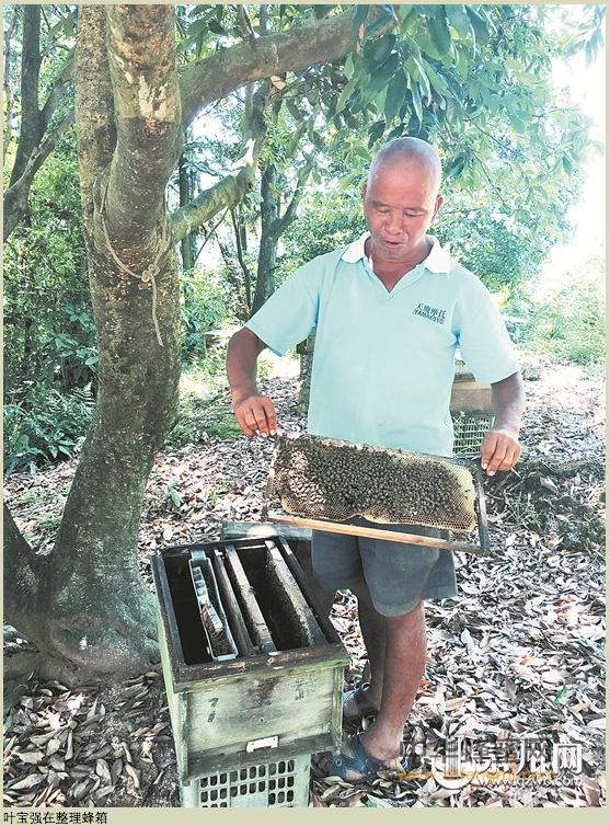 养蜂人 养蜂技术 养蜂人故事 养蜂业
