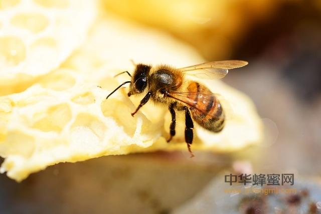 蜂产品 危害性 抗生素