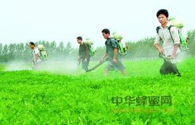 引起蜂产品中抗生素和农药污染的原因