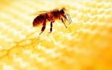 蜂胶的质量标准探讨之感官指标