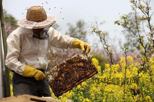 蜂蜡 行业 蜂蜡应用