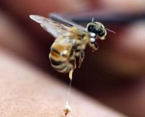 蜂毒 成分 蜂毒多肽