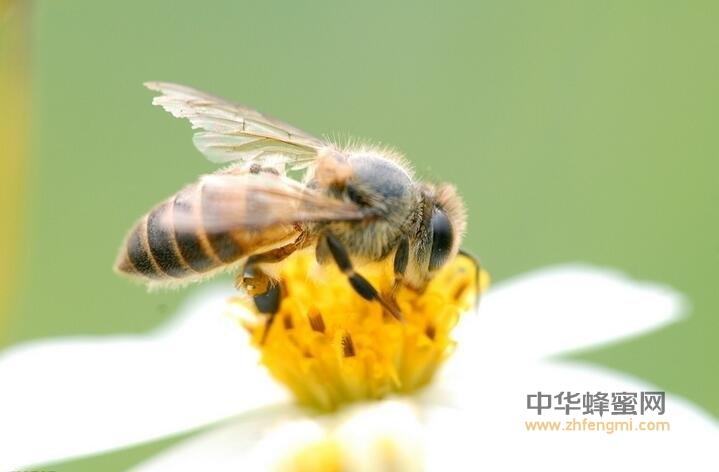蜂蜜的有效成分之非肽类物质