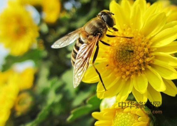 雄蜂 饲料 蜂产品深加工