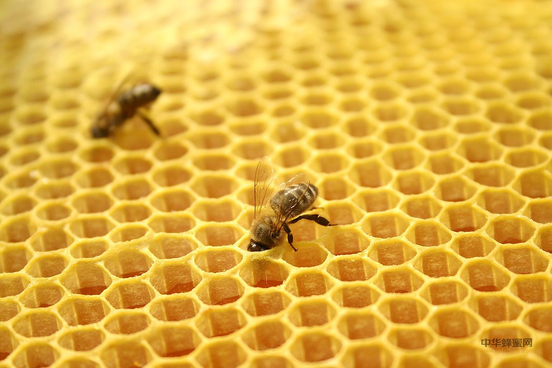 蜂王浆 蜂产品 加工要求