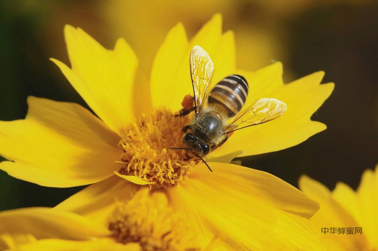 蜂花粉 微波灭菌 深加工技术
