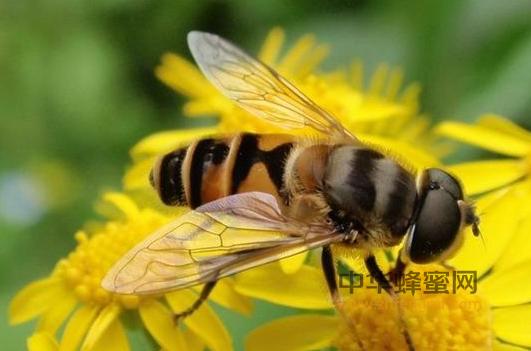蜂花粉 消毒灭菌 深加工技术