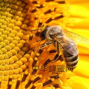 蜂花粉 脱敏技术 深加工