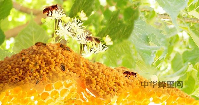蜂花粉 破壁技术 湿法破壁