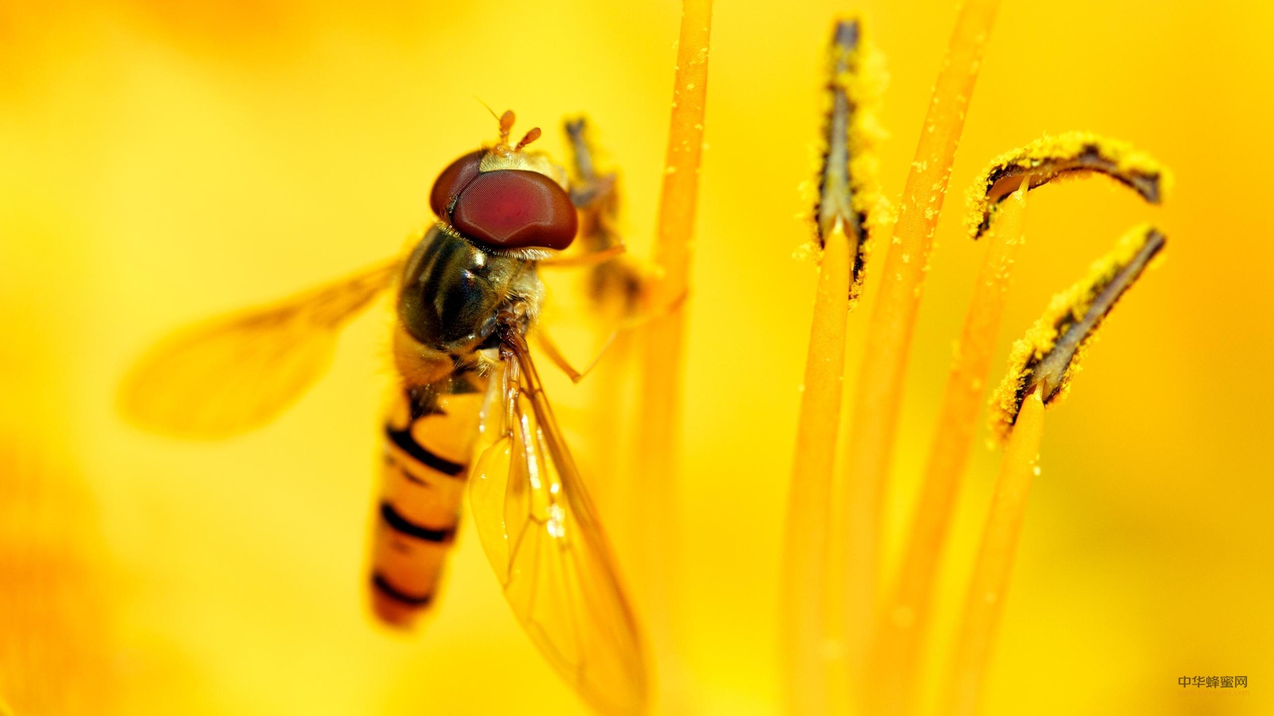 浓缩蜂蜜 原料验收 蜂产品