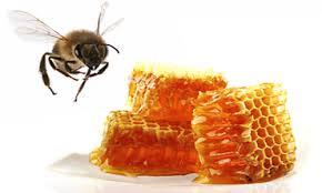 蜂蜜 要点 浓缩
