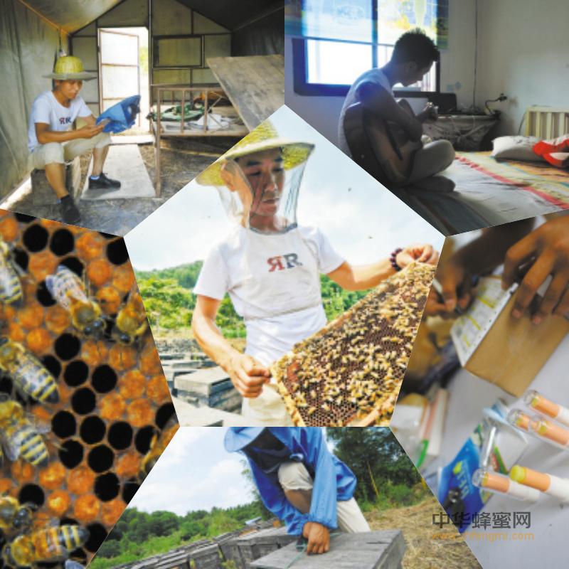 奉化 养蜂人 养蜂人故事 养蜂 养蜂场 学习养蜂