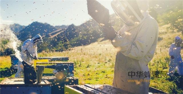 新政下对国外蜂蜜生产企业的市场影响