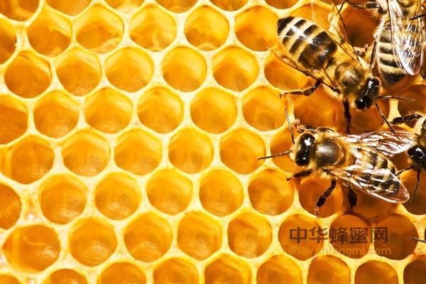 幼虫 蜜蜂 保鲜液浸泡法