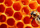蜂巢 药理 作用