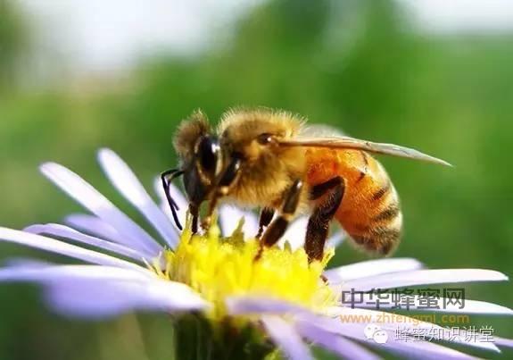养蜂人应该知道的养蜂知识